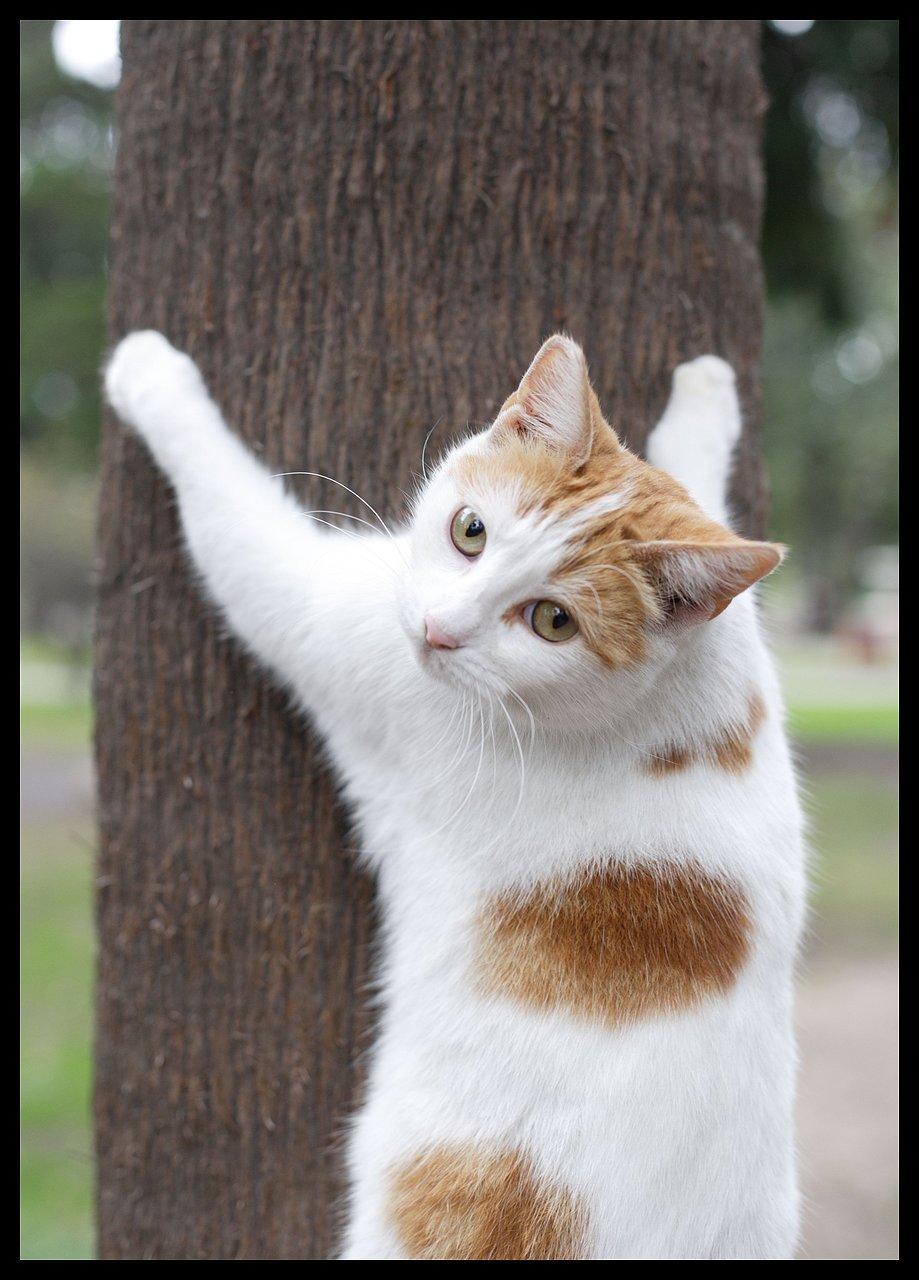 http cats xbubs ru mevalardan-chiroyli-savat-yasash html